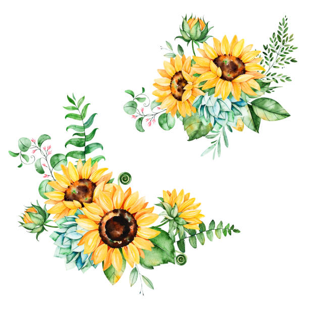beautiful floral collection with sunflowers - sunflower stock illustrations