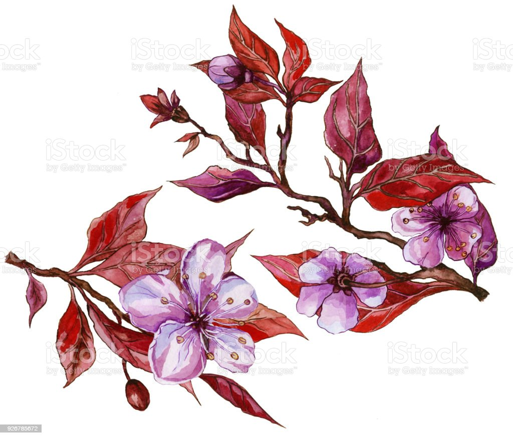 Beautiful Fruit Tree Flower On A Twig Floral Set Of Two Twigs In ...