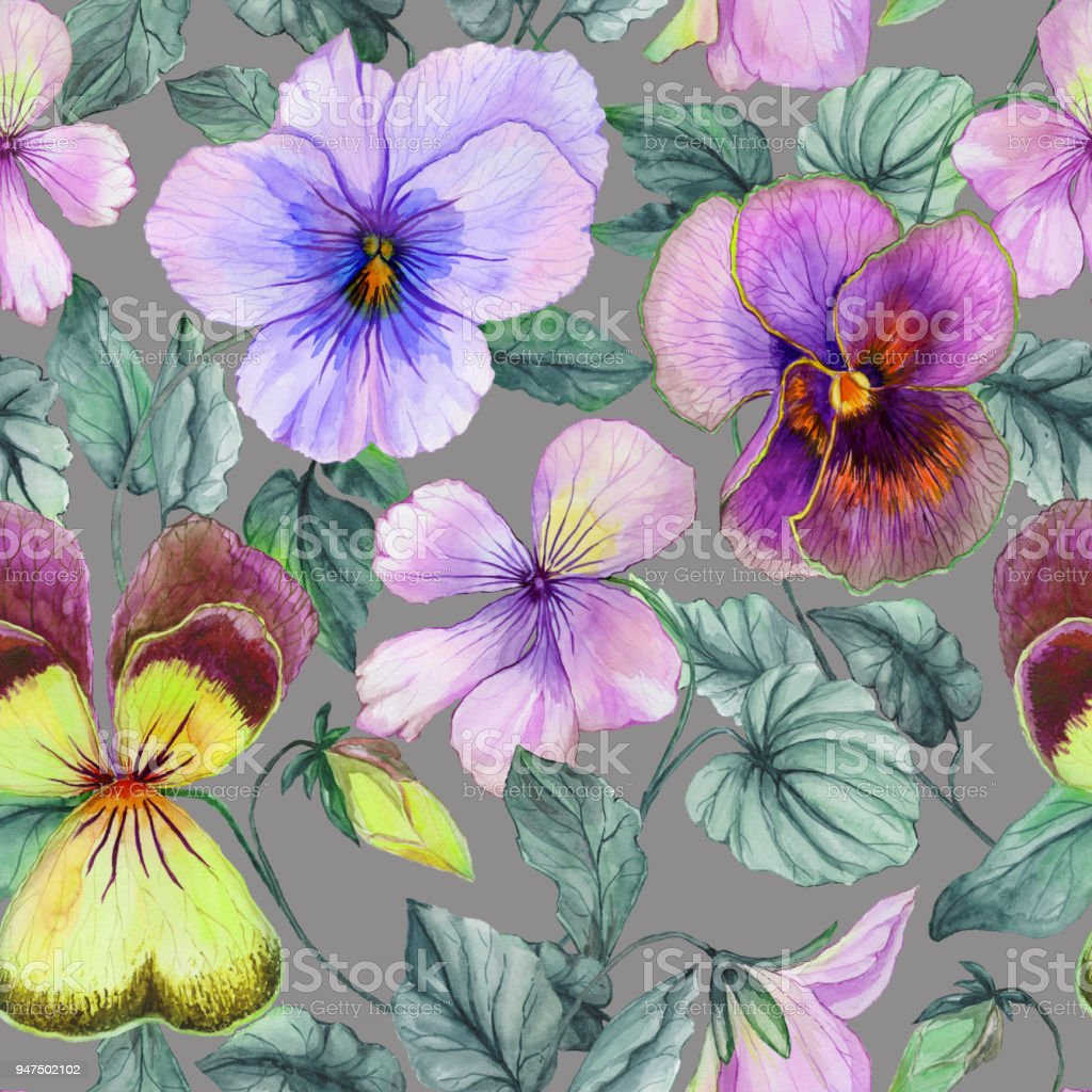 Beautiful Large Purple And Yellow Viola Flowers With Green Leaves On