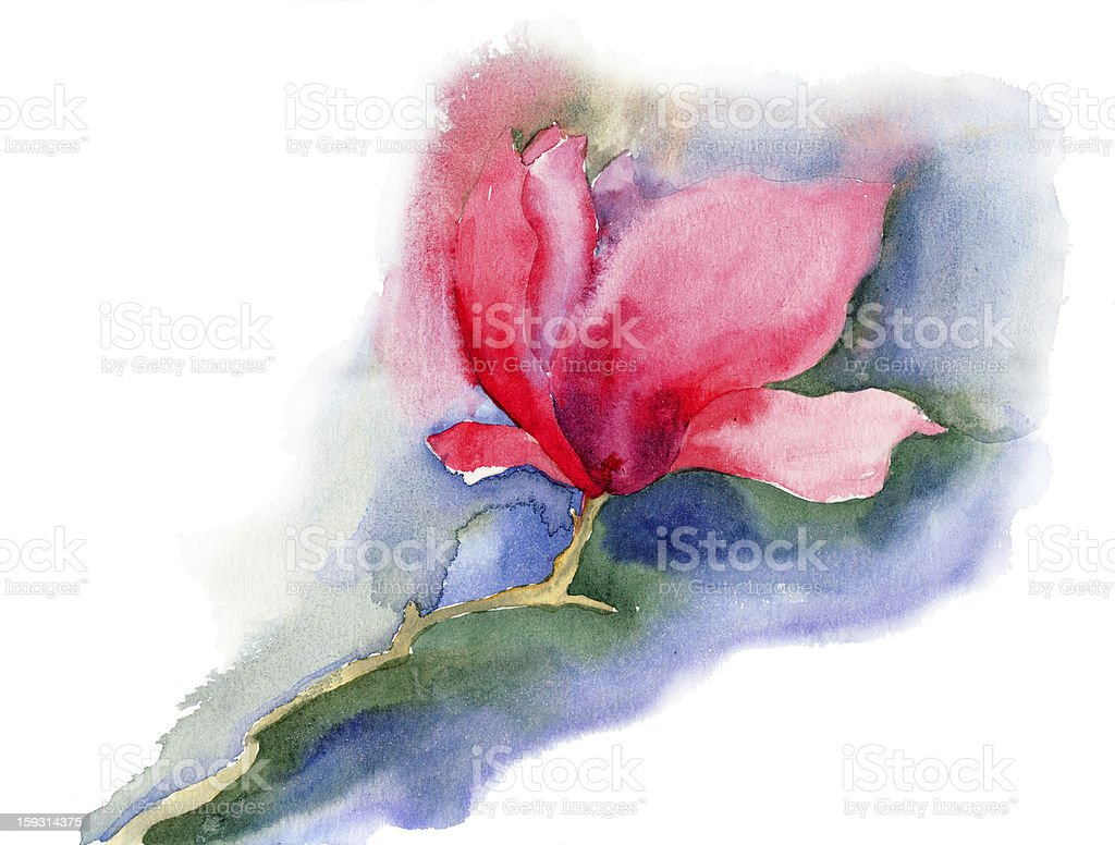 Beautiful Magnolia flowers royalty-free beautiful magnolia flowers stock vector art & more images of blossom