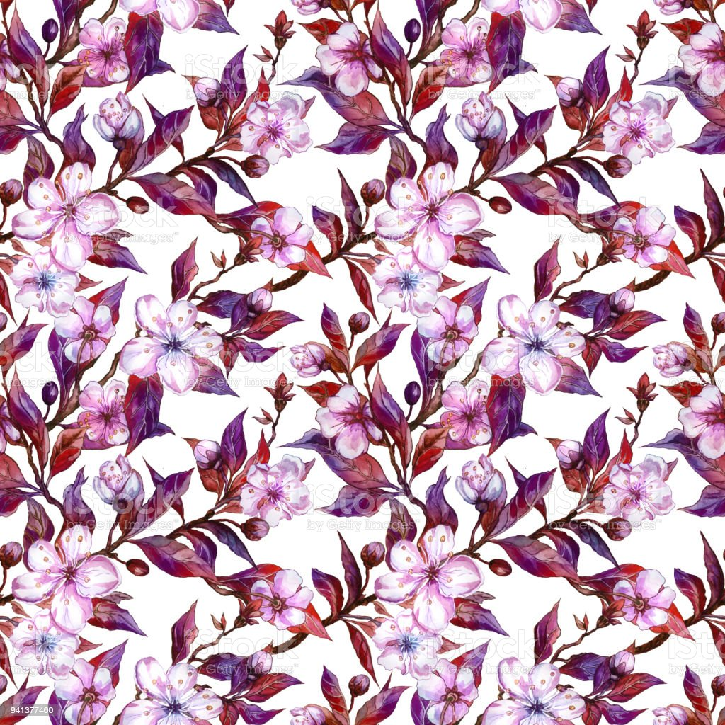 Beautiful plum tree twigs in bloom on white background pink flowers beautiful plum tree twigs in bloom on white background pink flowers and red and purple mightylinksfo