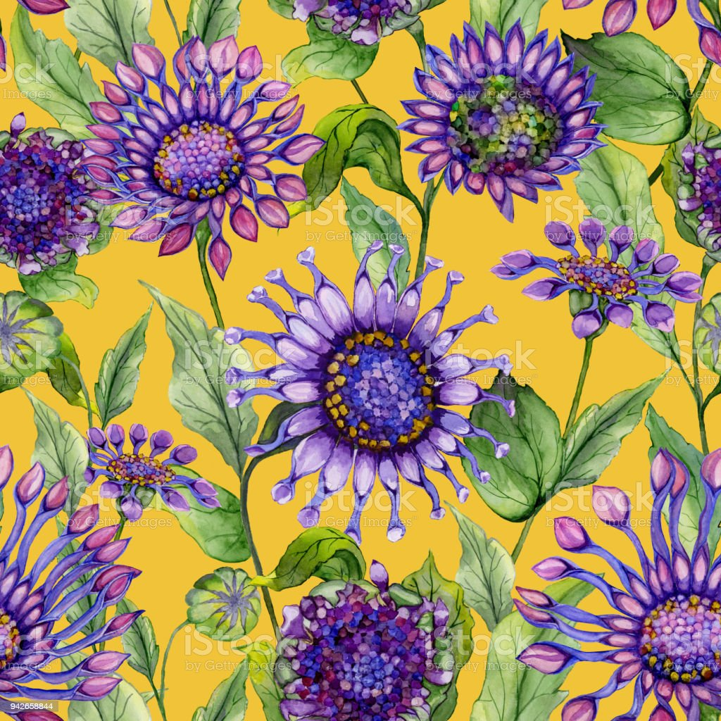 Beautiful Purple African Daisy Flowers With Green Leaves On Yellow
