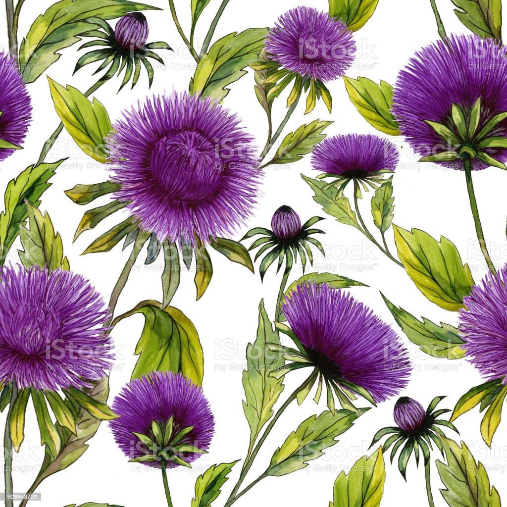 Ilustración de Flores Aster Púrpura Hermosa Con Hojas De Color Verde ...