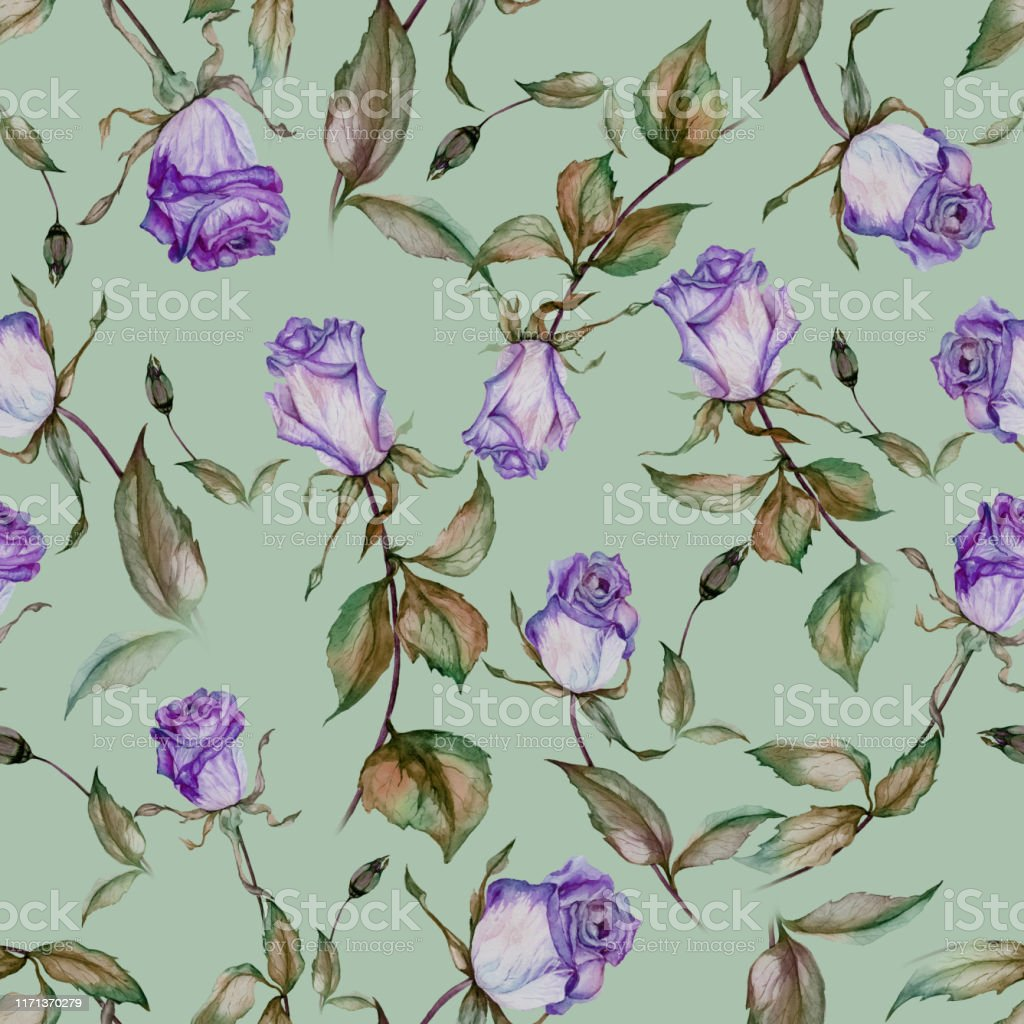 Beautiful Purple Roses On Stems With Leaves On Mint Green