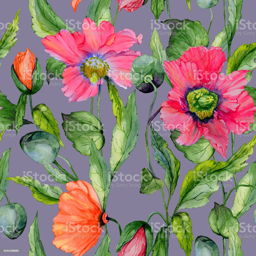 Beautiful Red Poppy Flowers With Green Leaves On Gray Background