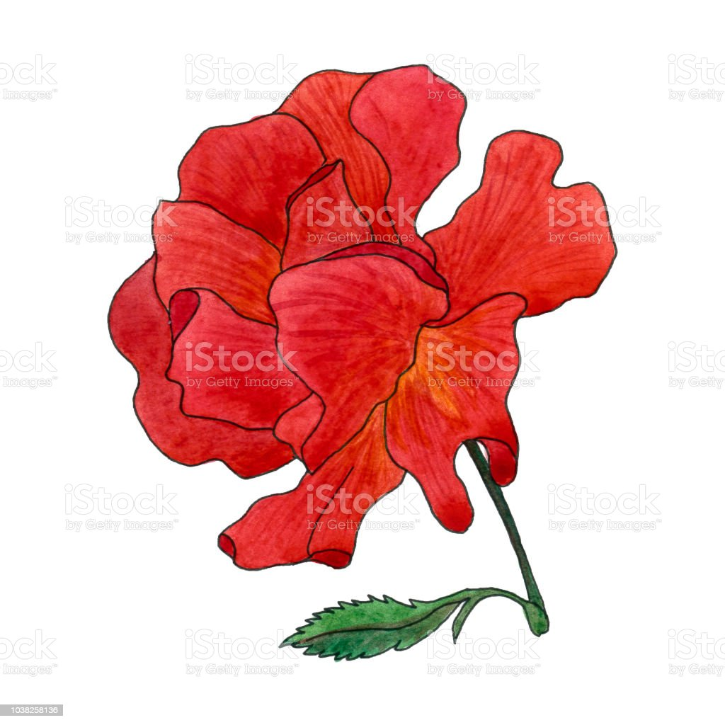 Belle Fleur Rose Rouge Isole Sur Fond Blanc Cliparts Vectoriels Et