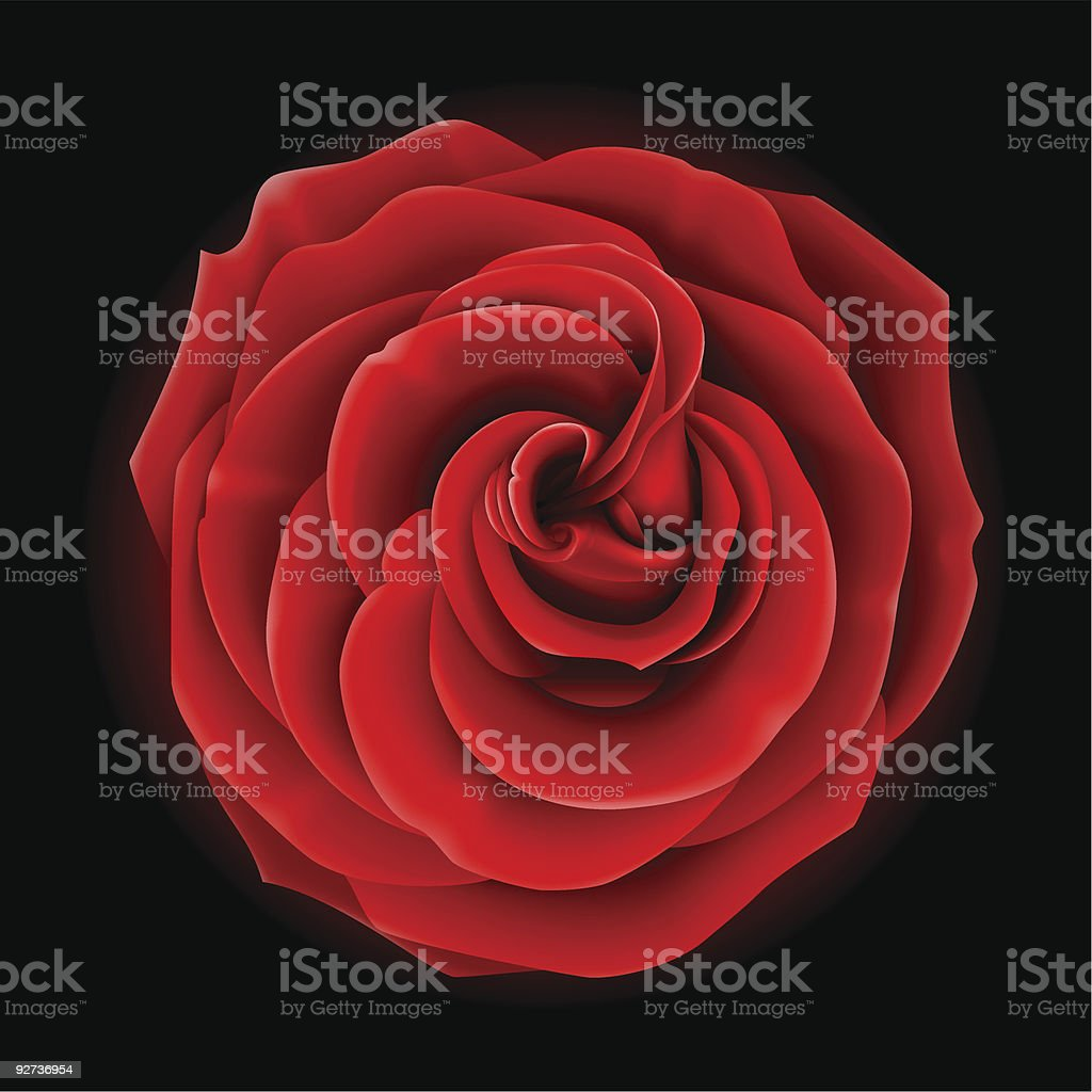 Beautiful red rose vector art illustration