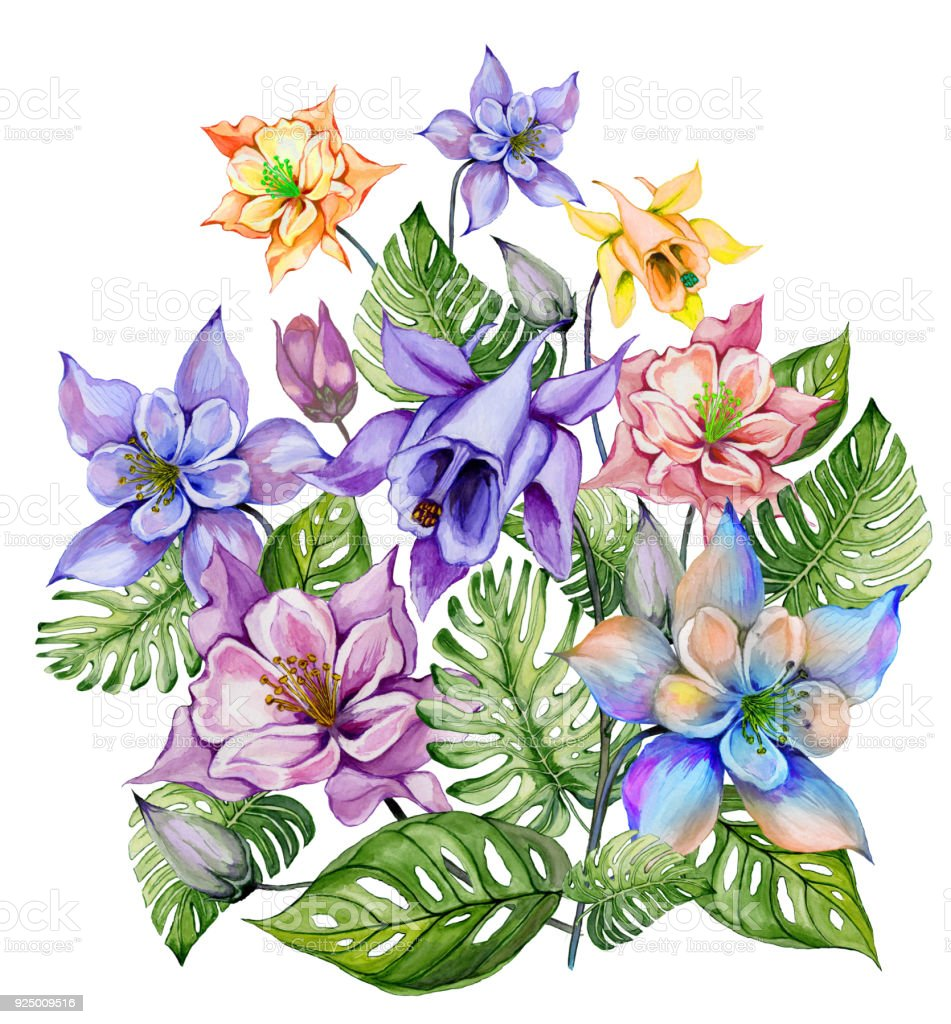 Beautiful Tropical Flowers Bunch Of Columbine Flowers And Exotic