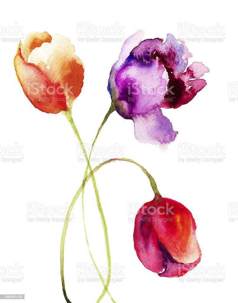 Immagini Belle Da Dipingere belle tulipani fiori dipinto ad acquerelli - immagini