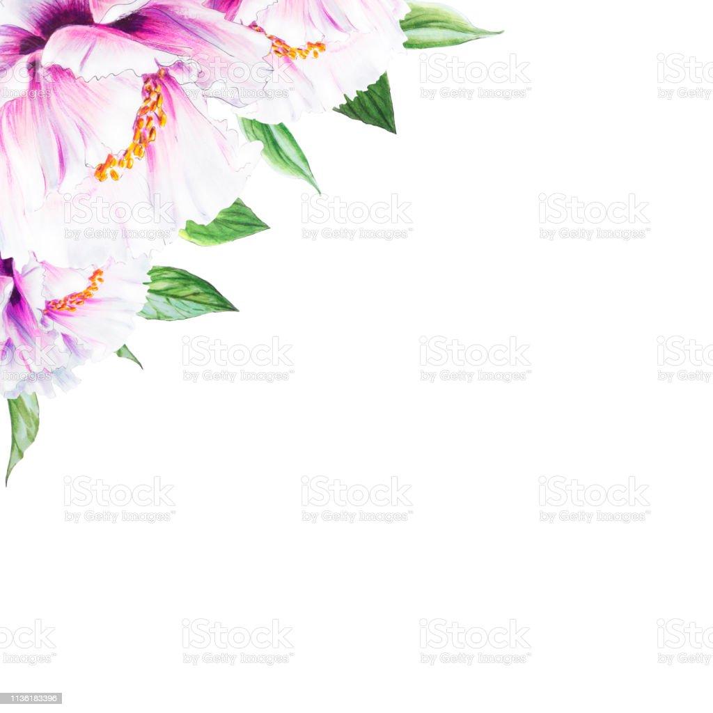 Guzel Beyaz Sakayik Kose Cerceve Kompozisyon Cicek Baskisi Isaret