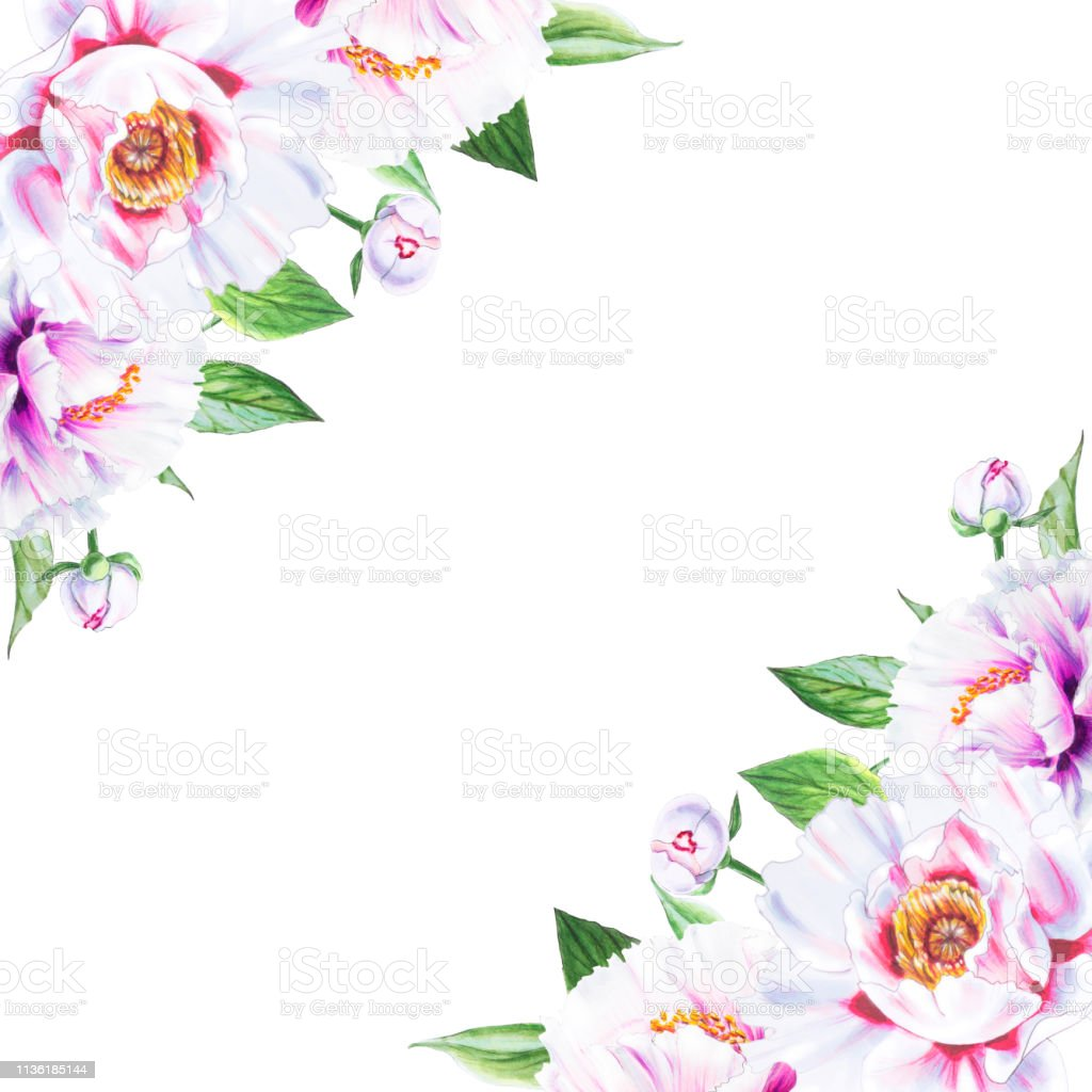 Beautiful White Peony Corner Frame Composition Floral Print Marker