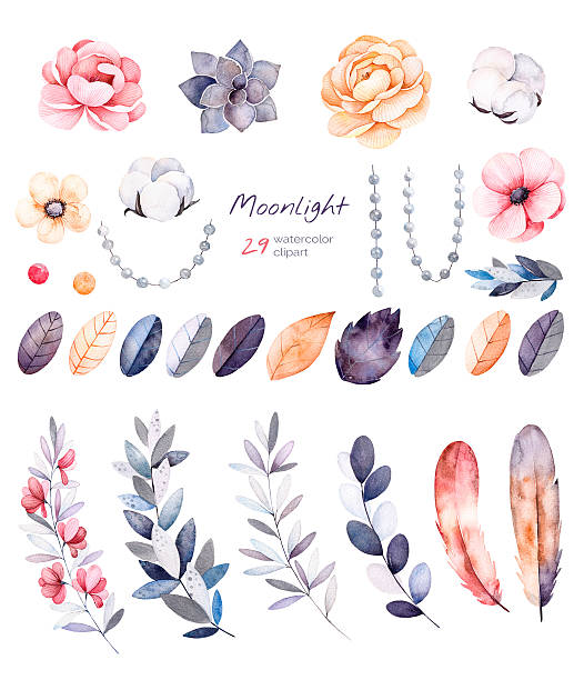beautiful winter collection with branches,cotton plants,flowers - cotton stock illustrations, clip art, cartoons, & icons