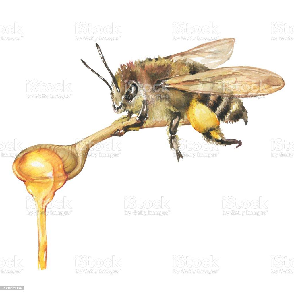 Arı Ve Tahta Kaşık üzerinde Doğal çiçek Taze Bal Illüstrasyon Izole
