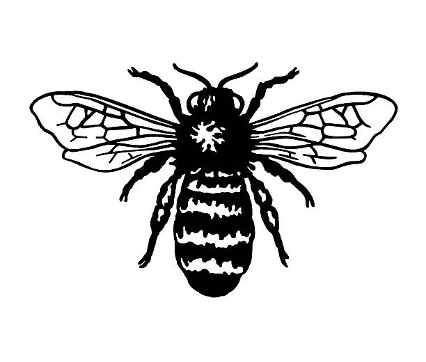 Best Black And White Bee Illustrations, Royalty-Free ...