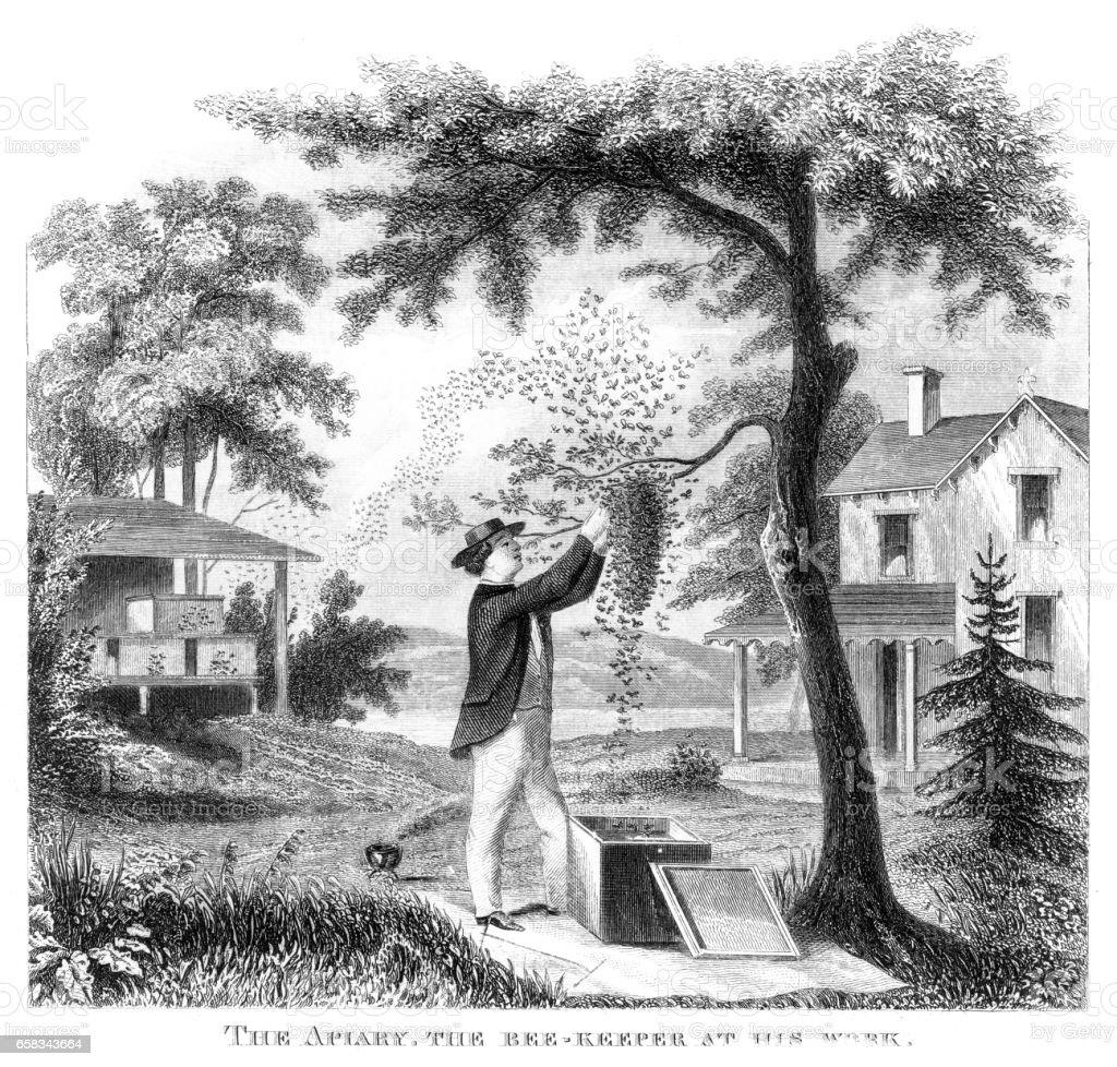 Apiculteur gravure 1873 - Illustration vectorielle