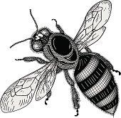 istock Bee vector 165520318