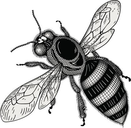 Biene Vektor Stock Vektor Art und mehr Bilder von Biene