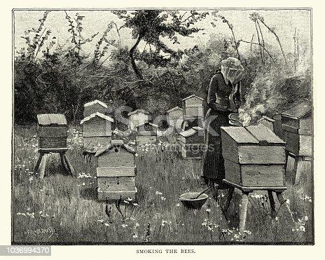Beekeeping, Female beekeeper smoking bee hives, 19th Century