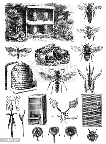 istock Beekeeping 529658452