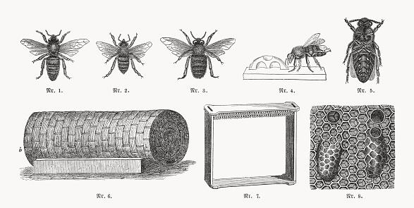 Beekeeping, wood engravings, published in 1893