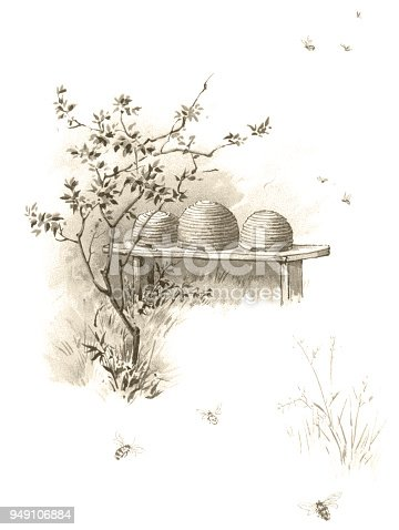 Bees and beehives - Victorian illustration