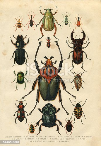 Steel engraving different beetles