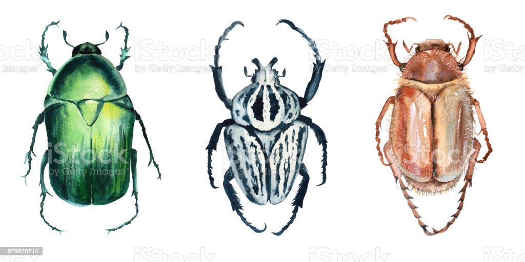 Beetle. Isolated on white background. vector art illustration