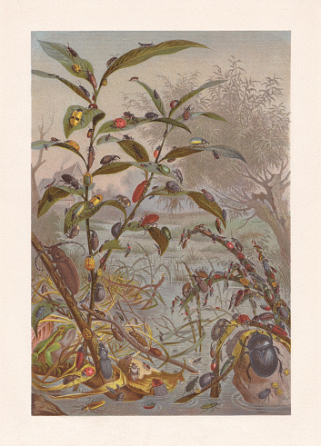 Beetle threatened by the flood, chromolithograph, published in 1884