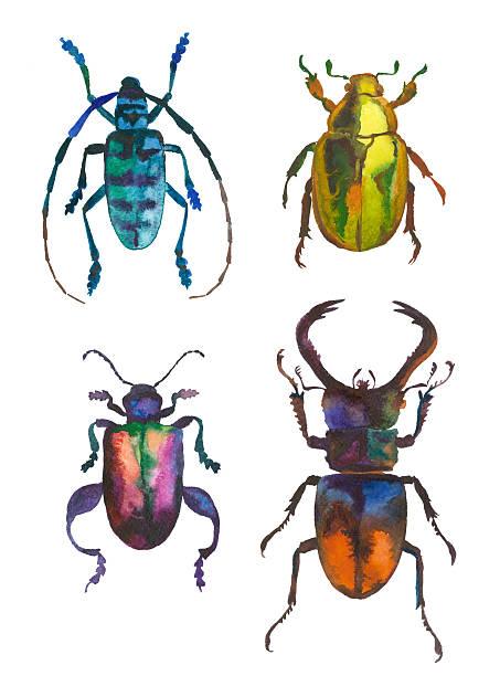 beetles set of green watercolor beetles beetle stock illustrations