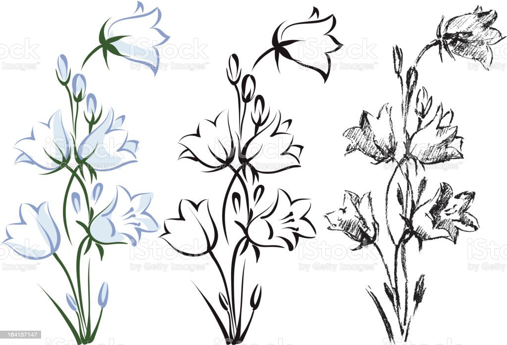 Bellflower vector art illustration
