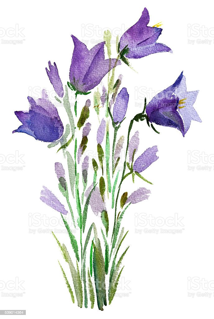 Bellflowers watercolor hand painting vector art illustration
