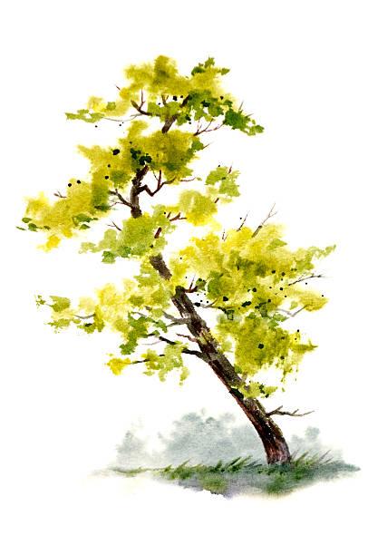 Bent Pine Tree Reaches For The Sun vector art illustration