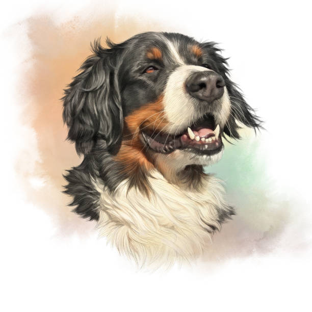 Bernese Mountain Dog. vector art illustration