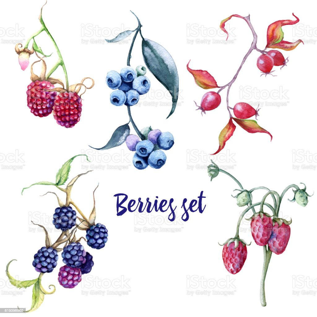 Berries set. Rosehips, blueberries, blackberries, strawberries, raspberries. Isolated on white background. vector art illustration
