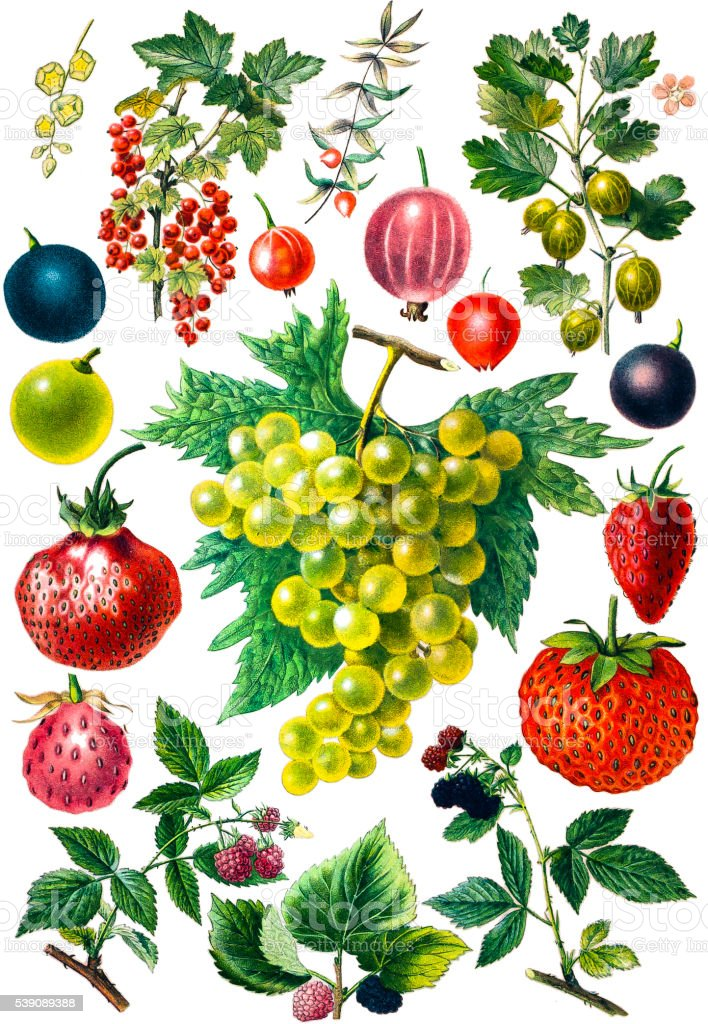Berry fruit set vector art illustration
