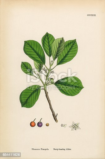 Very Rare, Beautifully Illustrated Antique Engraved and Hand Colored Victorian Botanical Illustration of Berry-bearing Alder, Rhamnus Frangula, 1863 Plants. Plate 319, Published in 1863. Source: Original edition from my own archives. Copyright has expired on this artwork. Digitally restored.