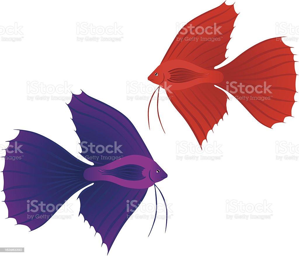 Betta Splendens fish royalty-free stock vector art