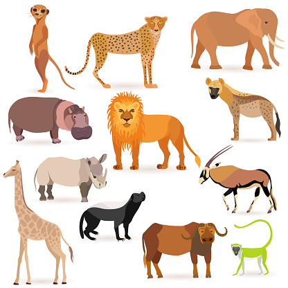 Big Set with Cute African Animals on White