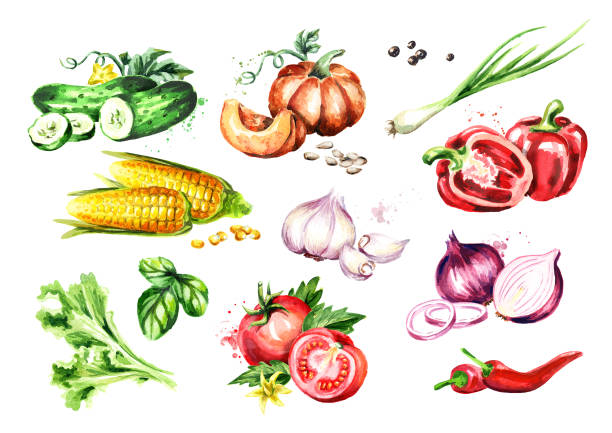 Big Vegetable set. Watercolor hand drawn illustration, isolated on white background Big Vegetable set. Watercolor hand drawn illustration, isolated on white background garlic stock illustrations