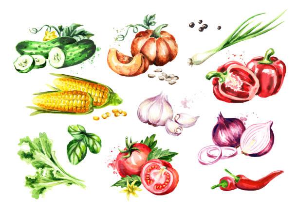 illustrazioni stock, clip art, cartoni animati e icone di tendenza di big vegetable set. watercolor hand drawn illustration, isolated on white background - aglio cipolla isolated