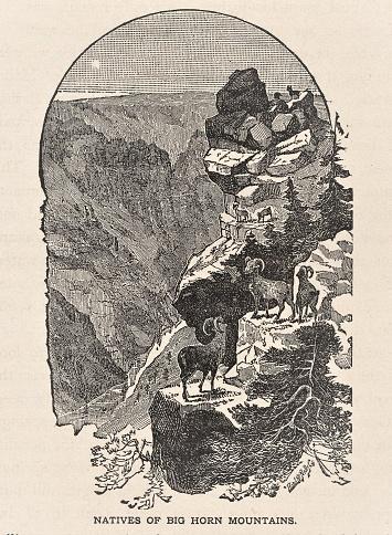 Bighorn Mountains Wyoming & Montana