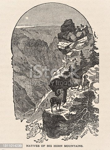 Mountain goats climb Bighorn Mountains in Wyoming and Montana. Vertical. Illustration published 1886. Source: Original edition is from my own archives. Copyright has expired and is in Public Domain.