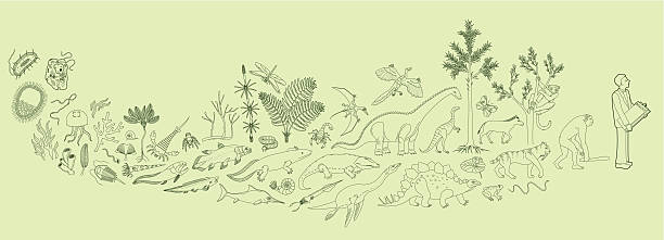 Biology evolutionary history from cell to student living organism stock illustrations