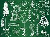 Biology plant sketches on school board - botany illustration