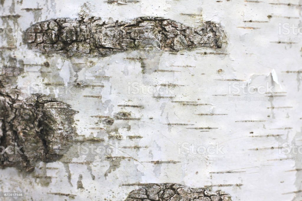 Birch bark with beautiful texture for black and white background vector art illustration