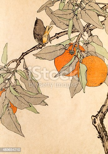 A bird and orange tree, a photograph of an original antique woodblock print from the Keinen kacho gafu 景年花鳥画譜 (Album of Bird-and-Flower) published by Imao Keinen in 1891.
