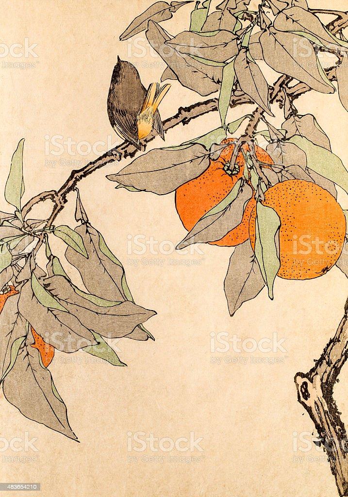 bird and orange tree, a 19th century Japanese woodblock print vector art illustration
