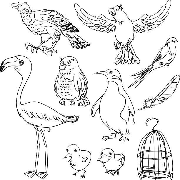 illustrations, cliparts, dessins animés et icônes de collection d'oiseaux en noir et blanc - dessin cage a oiseaux