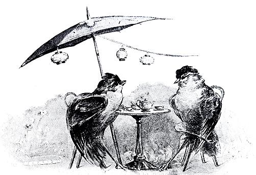 Bird couple sitting in the café