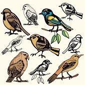 Bird Illustrations XV: Sparrows II (Vector)